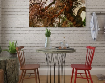 Digital photograph of a Weeping Willow Tree in autumn. digital photo. Autumn.