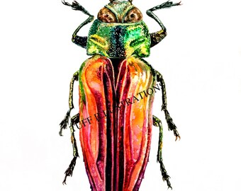 Beetle watercolor painting-Belionota mniszechi