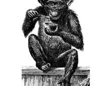 Baby Monkey Vintage Illustration  (Black) Plastisol Heat Transfer (In-Stock)