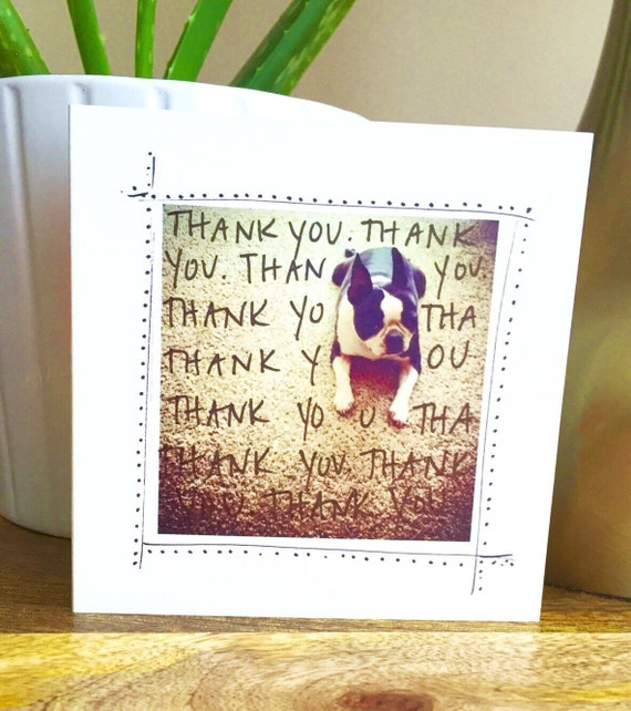 thank you card unique, thank you card funny, thank you card, thanks, thank you note, boston terrier, blank thank you card, sidesandwich