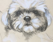 Dog Sketch Custom Dog Portrait, 8 x 10