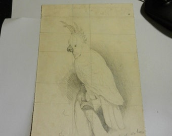 Vintage 1879 Hand Drawn Bird study Signed Josey Goldman Drawing