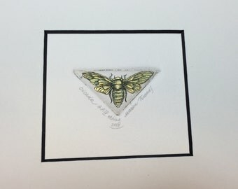 Cicada. Original hand pulled etching and watercolor.