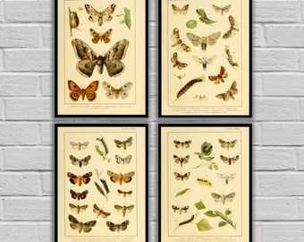 Vintage Moths and Caterpillars - Set of 4 - Print or Canvas - Insect Wall Art - Butterfly and Moth Lithographs  - 247 - 250
