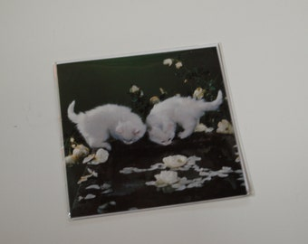 White Kittens by Water Card
