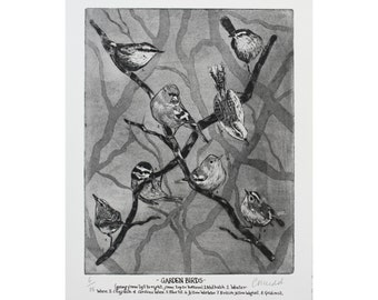 Birds etching-Bird Print- Bird Art -Drawing of birds -Garden Birds-British Birds.