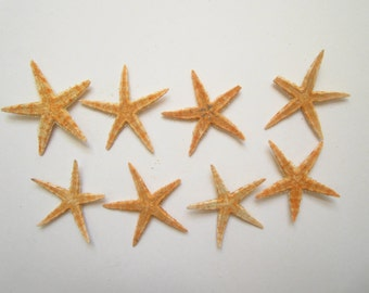 50 Damaged Tan Starfish-Starfish Bulk-Beach Wedding Decor-Crafts Suplies-Beach Wedding Favors-Starfish for Crafting-Real Starfish-Starfish