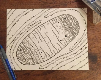 Mitochondria - Original Drawing