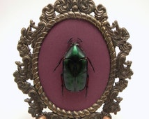 Green Scarab Beetle in Vintage Metal Frame - Specimen Curiosities Oddities Preserved Insects Gothic Victorian Bohemian Naturalist Steampunk