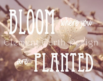 Bloom Where You Are Planted, Cherry Blossoms, Instant Download, 12x12, Fine Art Digital Photo, Digital Printable, Photography