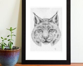 Art Print - Eurasian Lynx 7x5