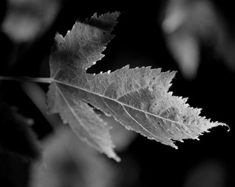 Black and White Art Photography Wall Hanging Wall Decor Office Decor Leaf Office Decor Home Decor