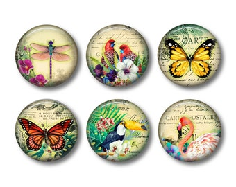Butterfly Magnets, Bird Fridge Magnets, Nature Magnets, Magnet Set, Fridge Magnets, Refrigerator Magnet, Pretty Magnets