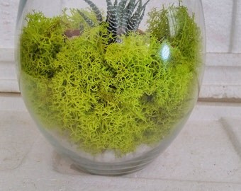Succulent Terrarium with Moss and River Rocks (FREE SHIPPING)