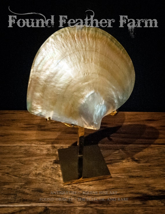 Large Natural Black Lip Pearl Polished Decorative Oyster Seashell on a 24K Gold Plated Museum Stand