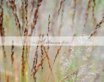 Wild Grass Soft Light - Printable Art - Grass Field - Digital Download - Photography Overlay - Graphic Design - Instant Art - Nature Art