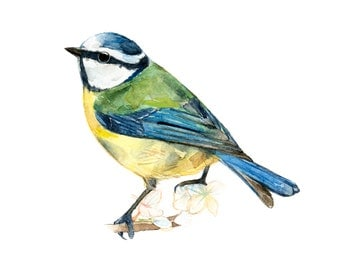 Blue Tit watercolor painting - bird watercolor painting - 5x7 inch print - 0010