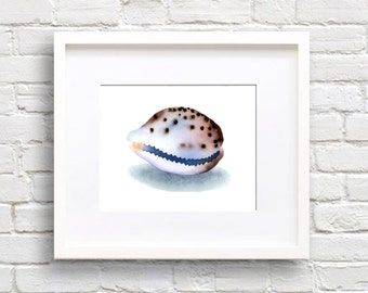 Sea Shell Art Print - Bathroom Art - Wall Decor - Tiger Courie - Watercolor Painting