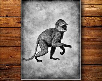 Monkey Print, Ape Decor, Mammal Poster, gorilla Art BW566