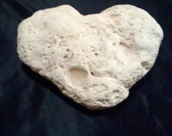 Heavy heart acorn fossil
