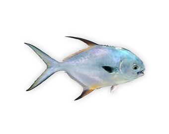 Permit Fish Decal - Permit Fish Sticker