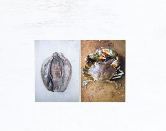 Food photography Crab & Coconut postcards set of 2