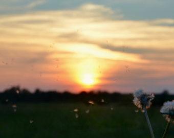 Wishing Away