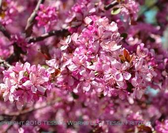 Bright Pink Blossoms digital downloadable art