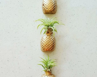 1 Pineapple Real/Living Air Plant magnet w/airplant,Pineapple decor, Air Plant Holder,Air Planter,Indoor Planter, Desk Planter,