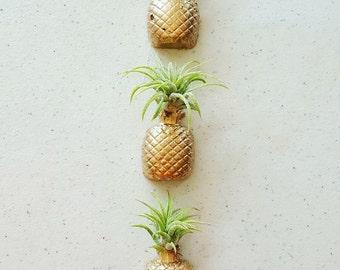 1 Pineapple Real/Living Air Plant magnet w/airplant,Pineapple decor, Air Plant Holder,Air Planter,Indoor Planter, Desk Planter,