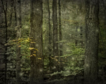 Forest Magic, Fine Art Print, Forest Photography, green, country, ethereal woods, fireflies in the trees