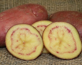 1 lb French Fingerling SEED POTATOES