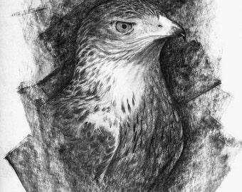 Hawk portrait, original drawing by evgeniyfill82, 8 x 12 inch, graphite on paper