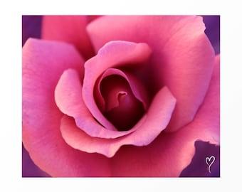 "PINK PHOTOGRAPH, Pink Rose Photograph, Flower Art, Floral Photography, Pink Print, Flower Photography, Pink Decor ""Center of My Universe"""