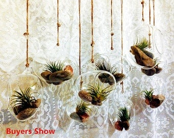 Set of 3 Air Plant Holders/Onion Terrarium //Indoor Succulent Garden // Hanging Eggs Shaped Glass Planters