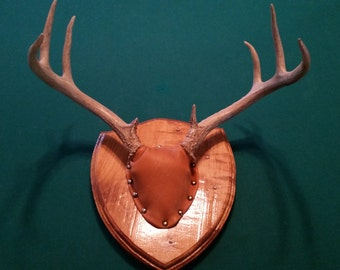Deer Antler Mount 8pt.