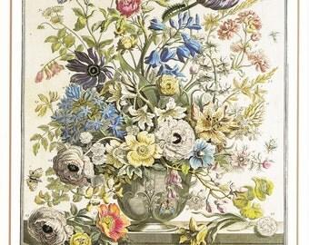 May vintage botanical art print Winterthurs 12 month of flowers Robert Furber wedding anniversary newborn baby gift idea 7.5 x 10 inches