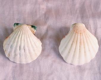 Handmade Vintage Seashell Earrings
