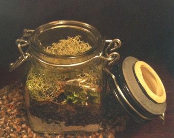 Mossy Terrarium To Go