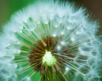 Canvas fine art Ready to hang wall decor Dandelion release the fairies