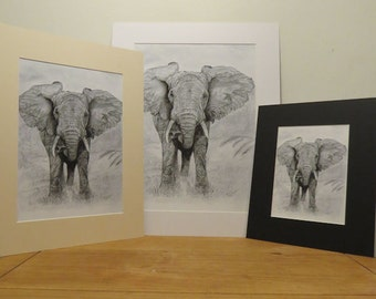 A5 Print - African Elephant Pencil Drawing