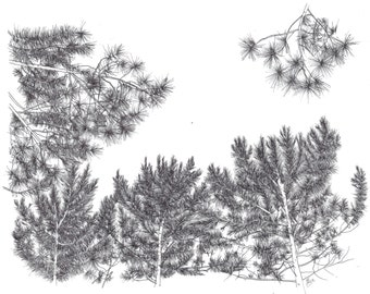 "Drawing ""Pine forest"""