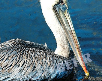 Pelican Photography Art Canvas Wrap, Photo Print on Canvas, Bird Gallery Wrap, Wall Art