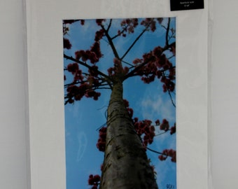 Tree with blossom: Mounted photo