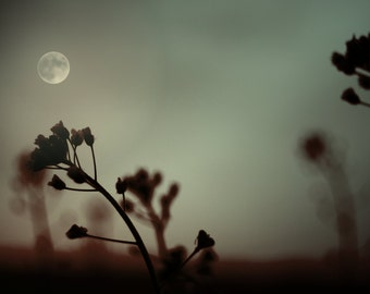Dark side of the moon / sepia / dried flowers / sunset / shadows