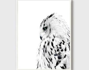 Owl Print, Black and white Photo, Owl modern poster, Animal Minimalist poster, wilderness Animals, wild animals, Owl Home Decor, Modern Art