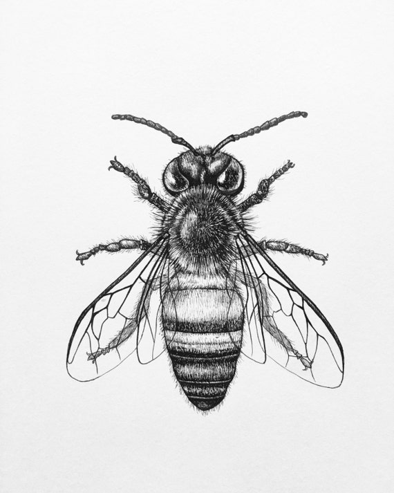Honey Bee Art Print Pen and Ink Drawing by FernsandFins on ...