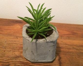 Rough Pot with Succulent
