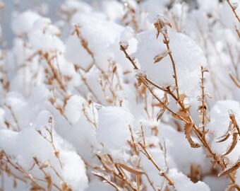 Winter scene, nature photography, fine art photography print, home decor