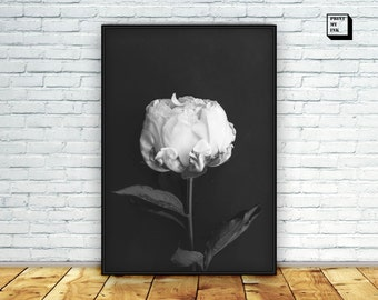 Peony Print, Black and white peony, White flower art, Peony Photography, Peony Flower, Peony Printable, Peony poster, White peonies download